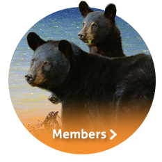 members_icon_beach bear